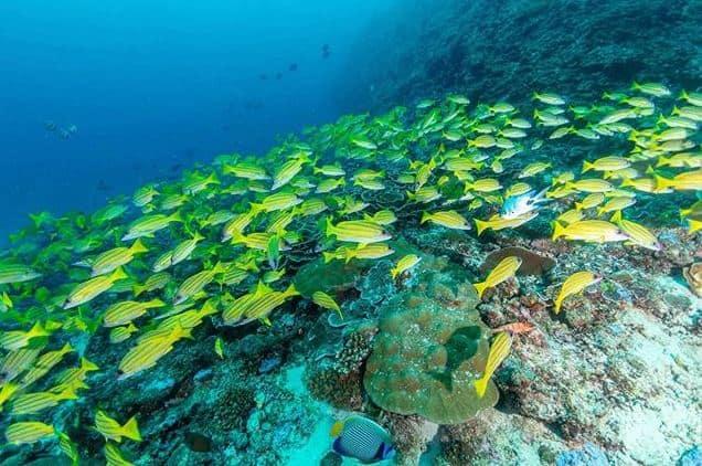 banco de peces en isla mafia