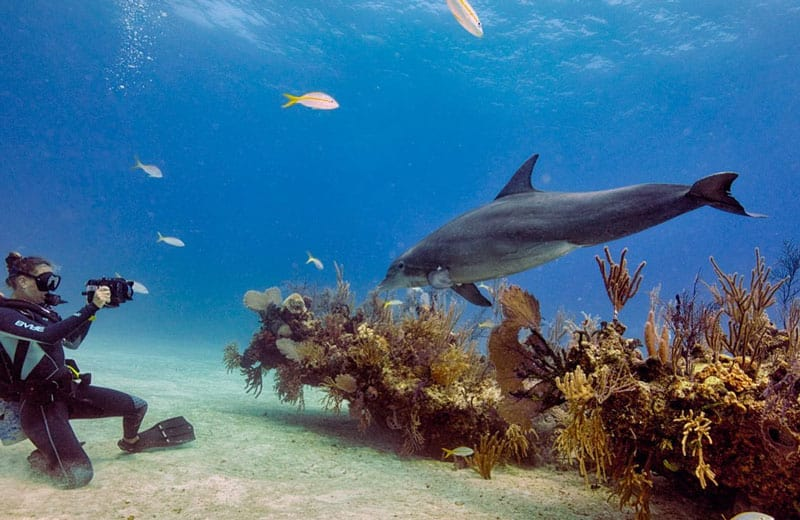 buceo con delfines mar rojo