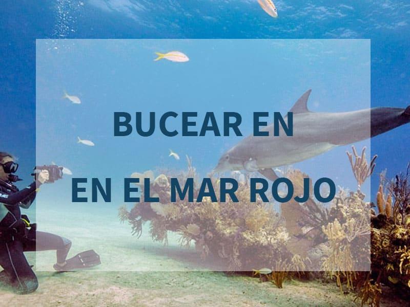 Bucear en el Mar Rojo – Guía Completa