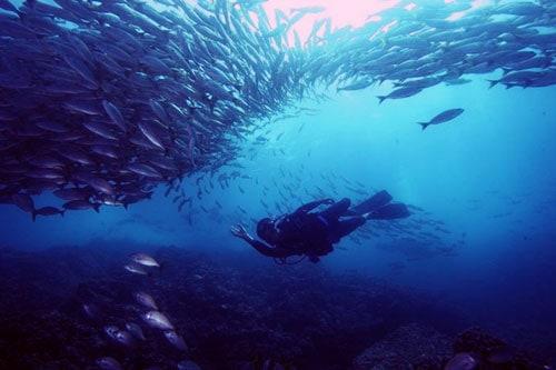 Los 10 mejores lugares para bucear en Costa Rica