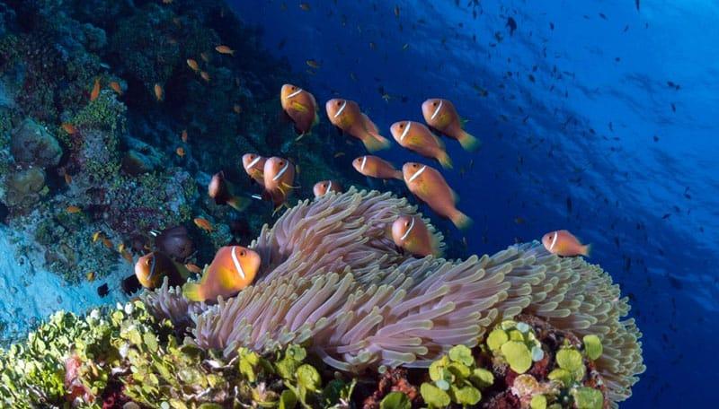 fotteyo peces de arrecife
