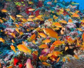 buceo maldivas macro