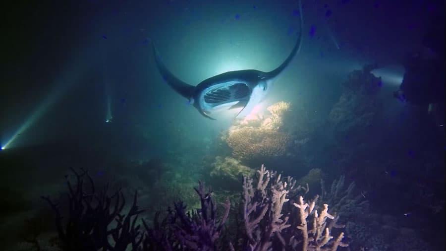 buceo nocturno con mantas en Maldivas