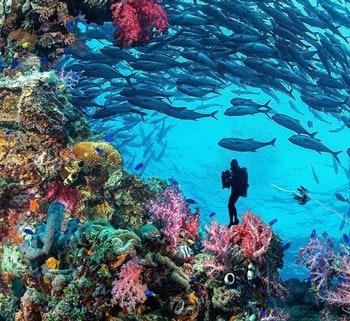 coral en ss yongala australia