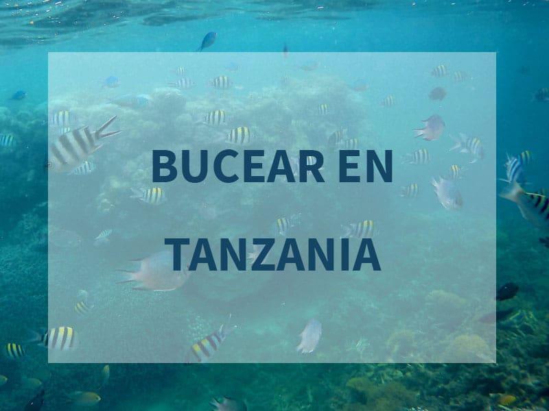 bucear en tanzania