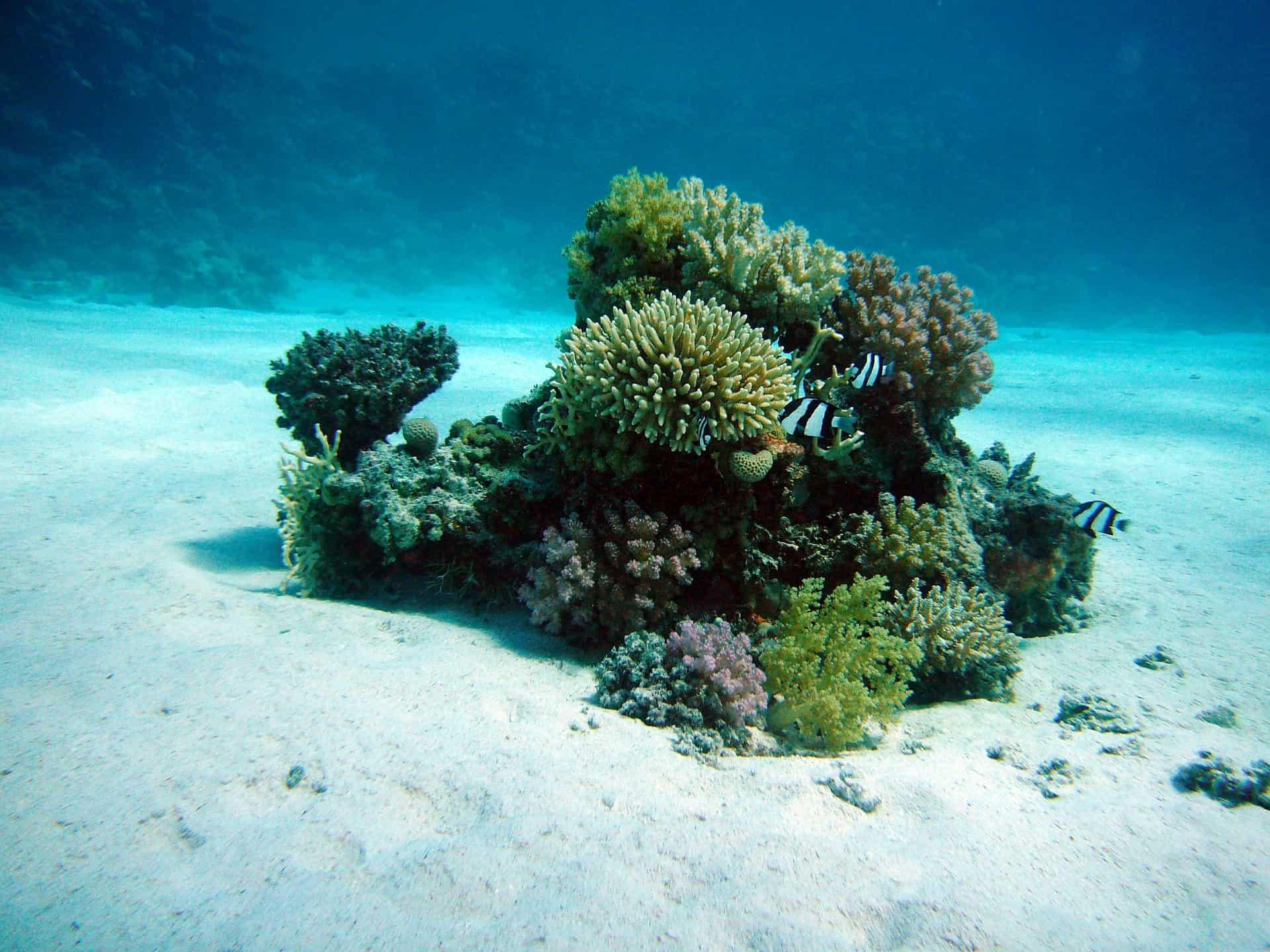 buceo Malapascua