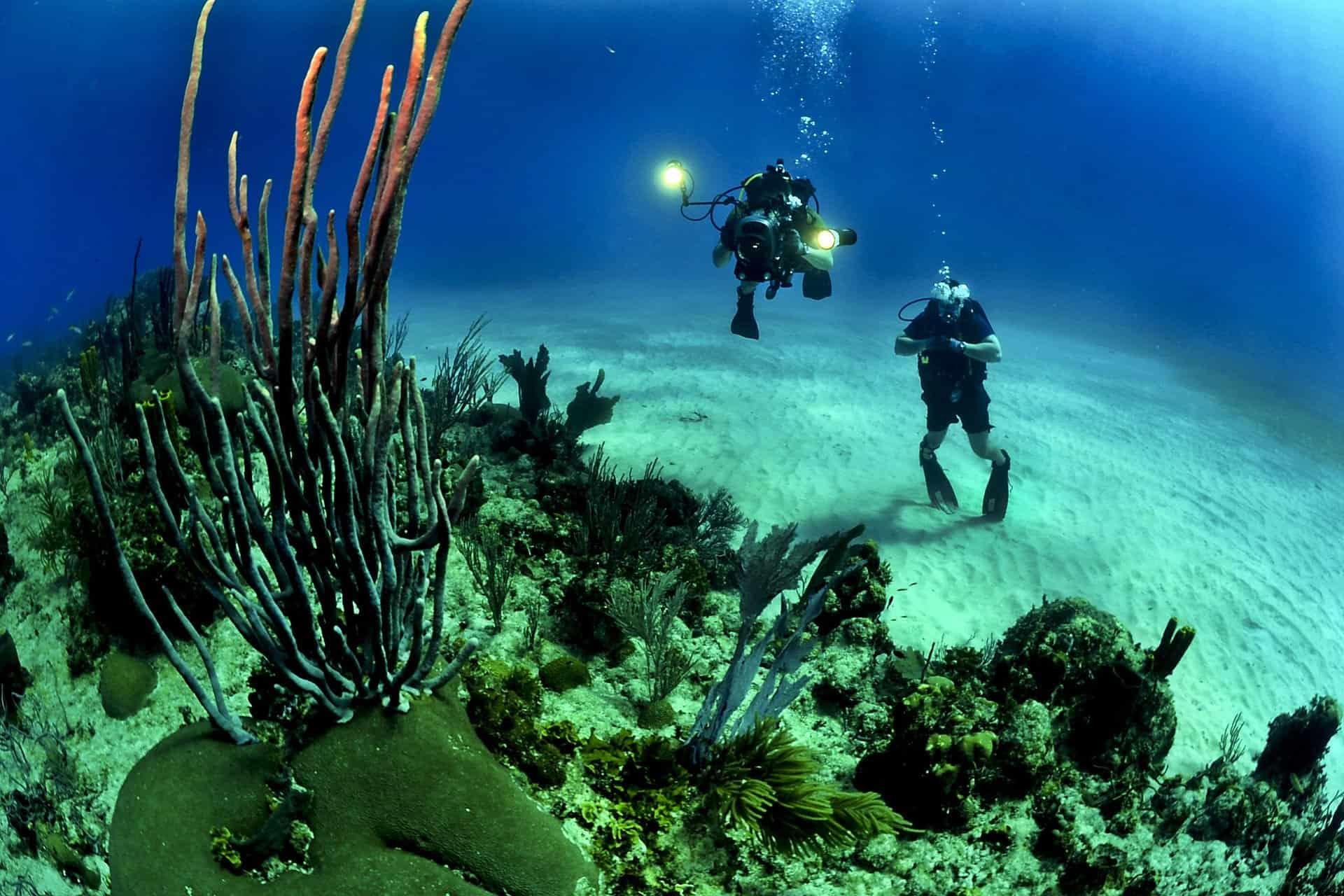 Buceo en la isla de Guadalupe