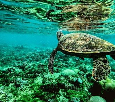 snorkel en tanzania