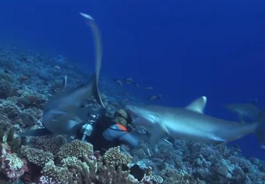 tiburón ataca a buzo calvo