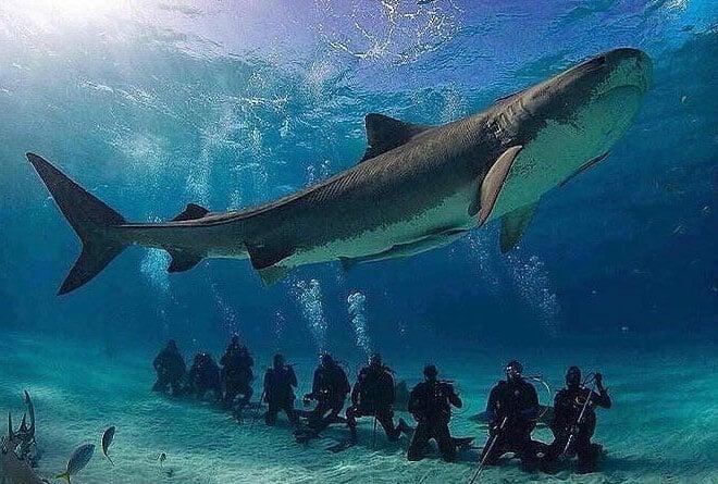 bucear con tiburones en grupo