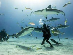 consejos bucear con tiburones