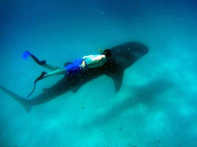 snorkl tiburon ballena isla de mafia