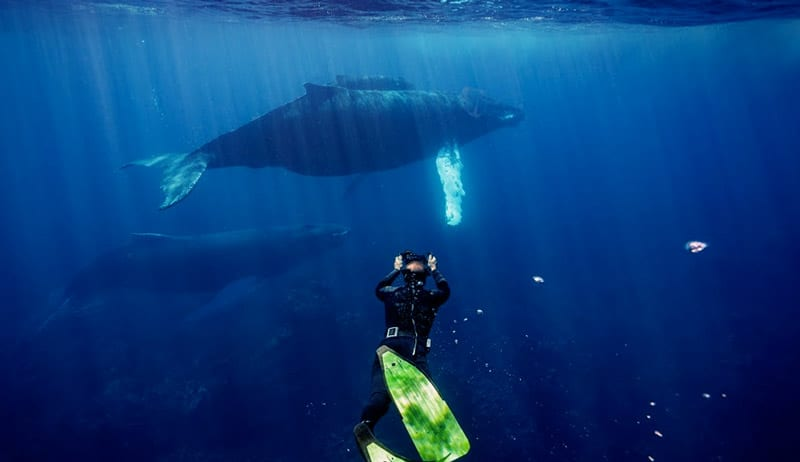 bucear con ballenas en republica dominicana banco de plata