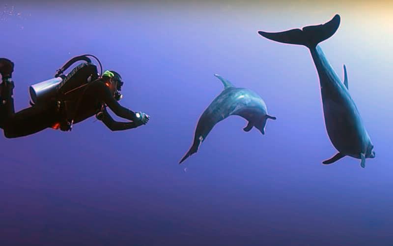 buceo con delfines en islas galapagos