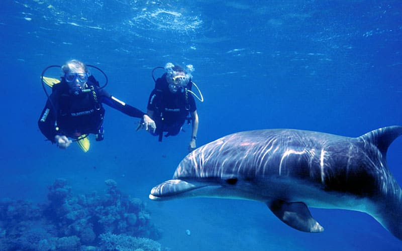 buceo con delfines en isla socorro