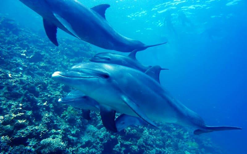 nadando con delfines en hawaii