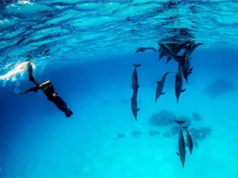 bucear con delfines