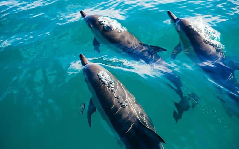 buceo con delfines azores
