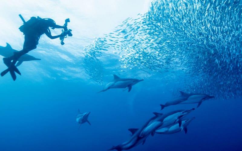 buceo con delfines en el sardine run de sudáfrica