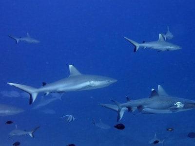 best scuba diving camera for beginners