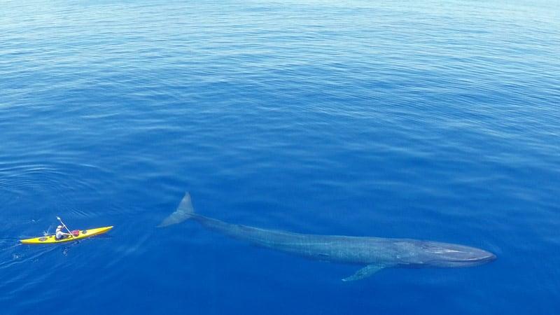 kayak para hacer snorkel con ballenas azules