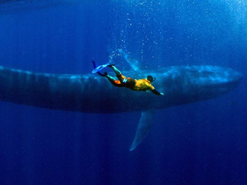 snorkel buceo con ballena azul