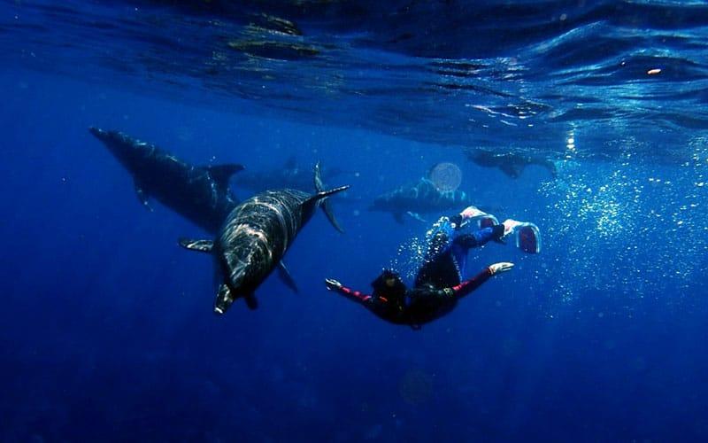 snorkel delfines ningaloo australia