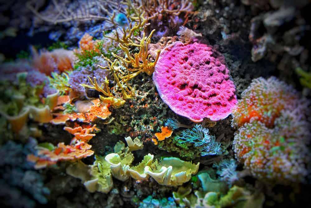 buceo corales cuba