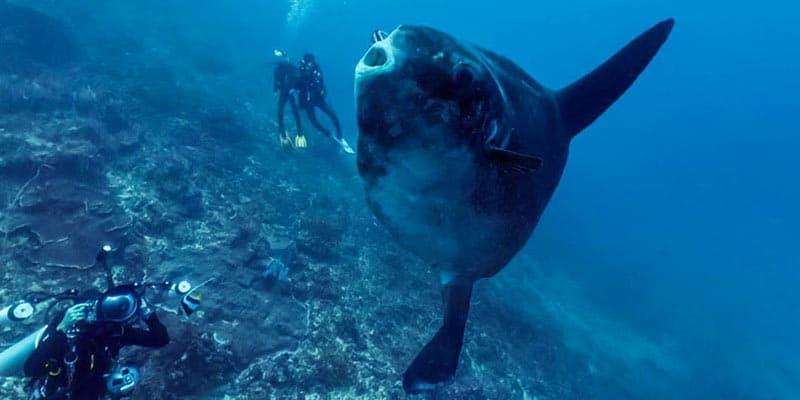 pez luna bajo de fuera cabo de palos