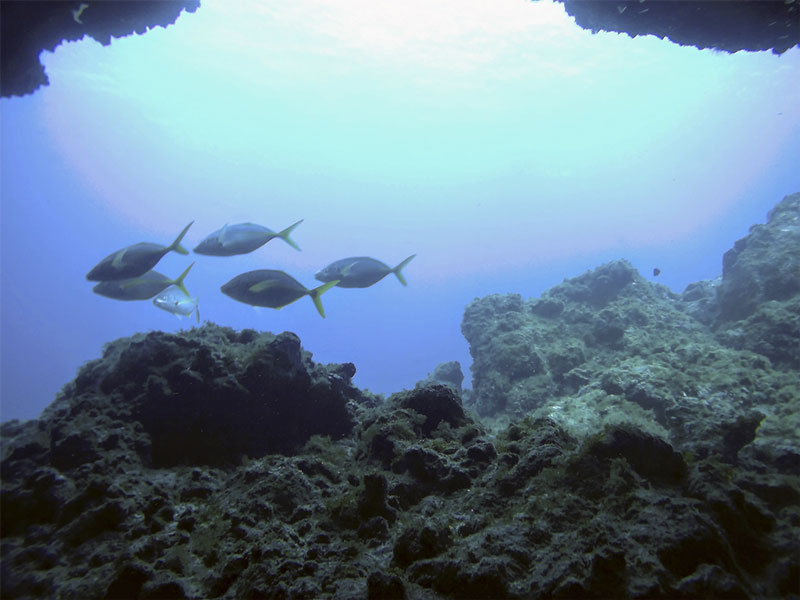 peces en cueva