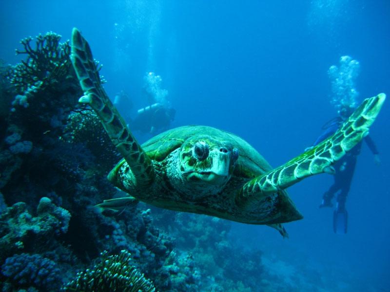tortuga en islas canarias