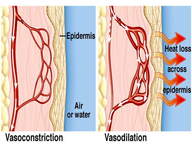 vasoconstriccion